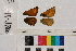 ( - RVcoll.14-J760)  @11 [ ] Butterfly Diversity and Evolution Lab (2014) Roger Vila Institute of Evolutionary Biology