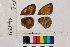 ( - RVcoll.14-J772)  @11 [ ] Butterfly Diversity and Evolution Lab (2014) Roger Vila Institute of Evolutionary Biology