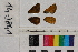 ( - RVcoll.14-J841)  @11 [ ] Butterfly Diversity and Evolution Lab (2014) Roger Vila Institute of Evolutionary Biology