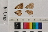 ( - RVcoll.14-L020)  @11 [ ] Butterfly Diversity and Evolution Lab (2014) Roger Vila Institute of Evolutionary Biology