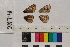 ( - RVcoll.14-L026)  @11 [ ] Butterfly Diversity and Evolution Lab (2014) Roger Vila Institute of Evolutionary Biology