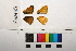 ( - RVcoll.12-M341)  @11 [ ] Butterfly Diversity and Evolution Lab (2014) Roger Vila Institute of Evolutionary Biology