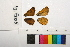 ( - RVcoll.12-O068)  @11 [ ] Butterfly Diversity and Evolution Lab (2014) Roger Vila Institute of Evolutionary Biology