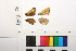 ( - RVcoll.12-R091)  @11 [ ] Butterfly Diversity and Evolution Lab (2014) Roger Vila Institute of Evolutionary Biology