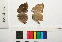 ( - RVcoll.11-E007)  @11 [ ] Butterfly Diversity and Evolution Lab (2014) Roger Vila Institute of Evolutionary Biology