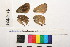 ( - RVcoll.11-E101)  @11 [ ] Butterfly Diversity and Evolution Lab (2014) Roger Vila Institute of Evolutionary Biology