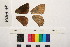 ( - RVcoll.11-F931)  @11 [ ] Copyright (2014) Roger Vila Institute of Evolutionary Biology