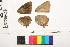 ( - RVcoll.12-M657)  @11 [ ] Copyright (2014) Roger Vila Institute of Evolutionary Biology
