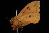 ( - Moth4372.03)  @14 [ ] CreativeCommons - Attribution Non-Commercial Share-Alike (2010) Unspecified Biodiversity Institute of Ontario