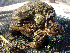  (Bufo - BORKO090)  @14 [ ] Copyright  G. Blagoev 2010 Unspecified